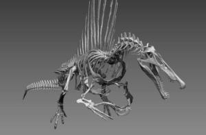 spinosaurus-skeleton-2