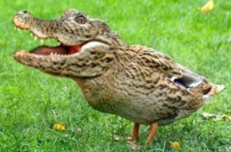 if evolution were true, then how come we don't have any crocoducks?